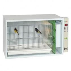 Cage Nursing (I051)