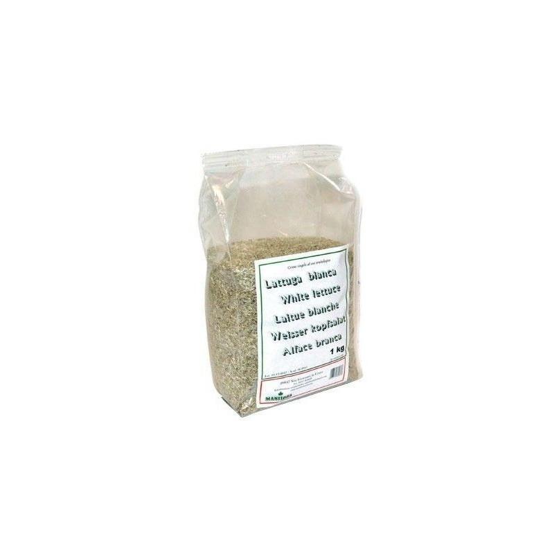 Laitue blanche Extra Manitoba 1kg