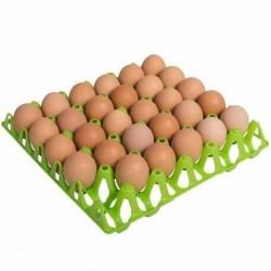 Plateau en plastique de 30 œufs