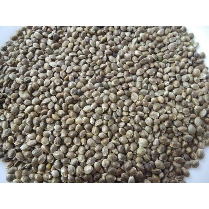 Seed hemp seed French DISFA 3.5 KG