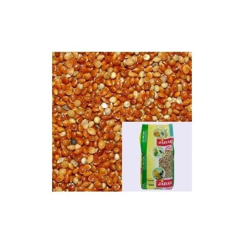 Semilla de Mijo rojo JARAD 1 kg