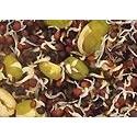 Versele Laga Canarios semillas para germinar