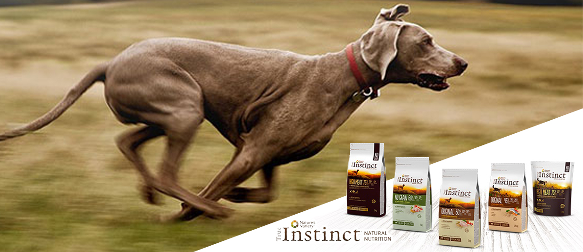 Natural Food for dogs and cats, True Instinct