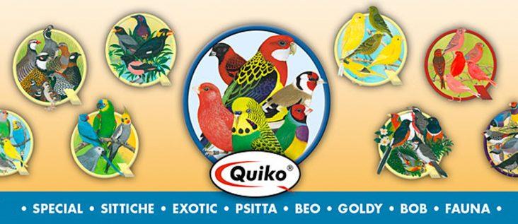 2017-05 quiko