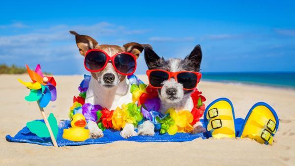 Mascotas-Verano-Vacaciones