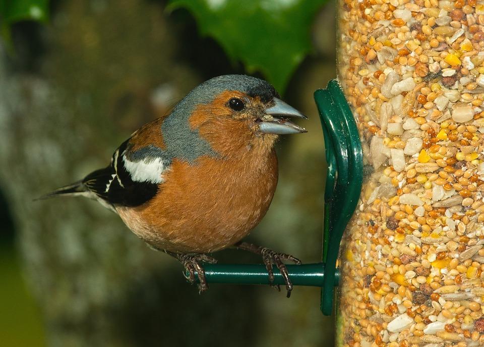 semillas para pájaros