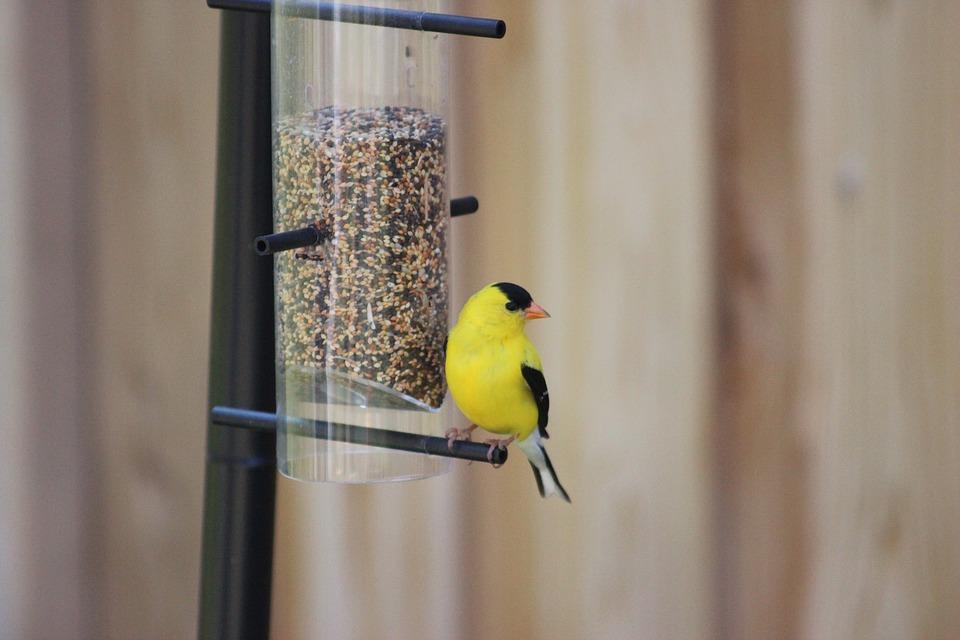 plumas amarillas