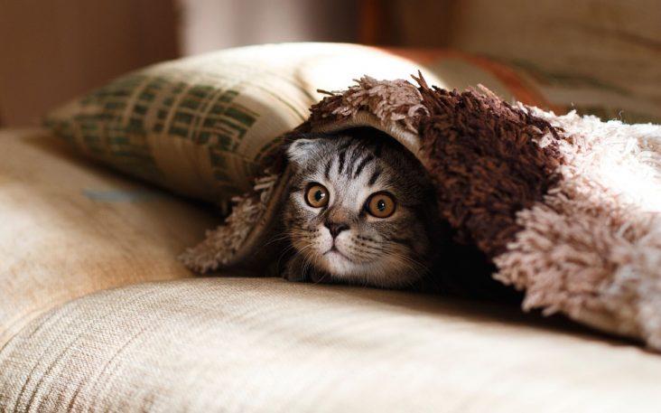 antiparásitos para gato
