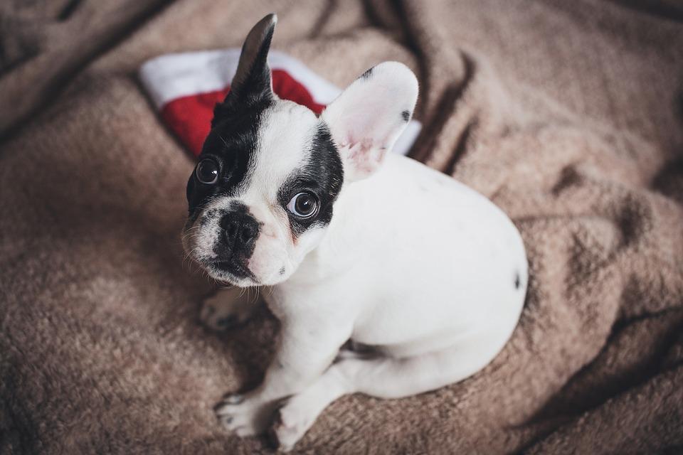 mascota perro navidad