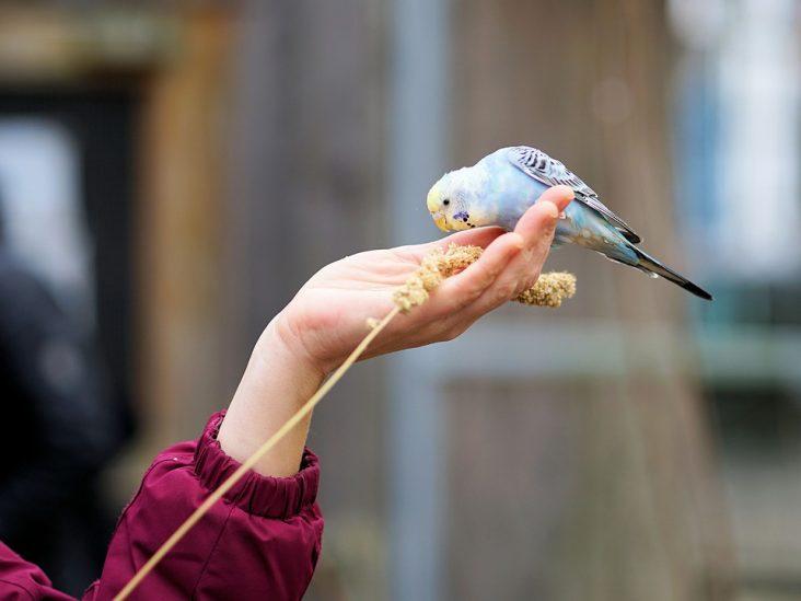 complementos alimenticios para aves