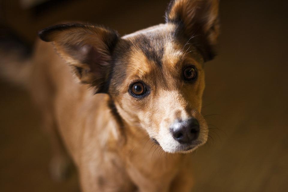 antiparasitarios perro leishmaniosis