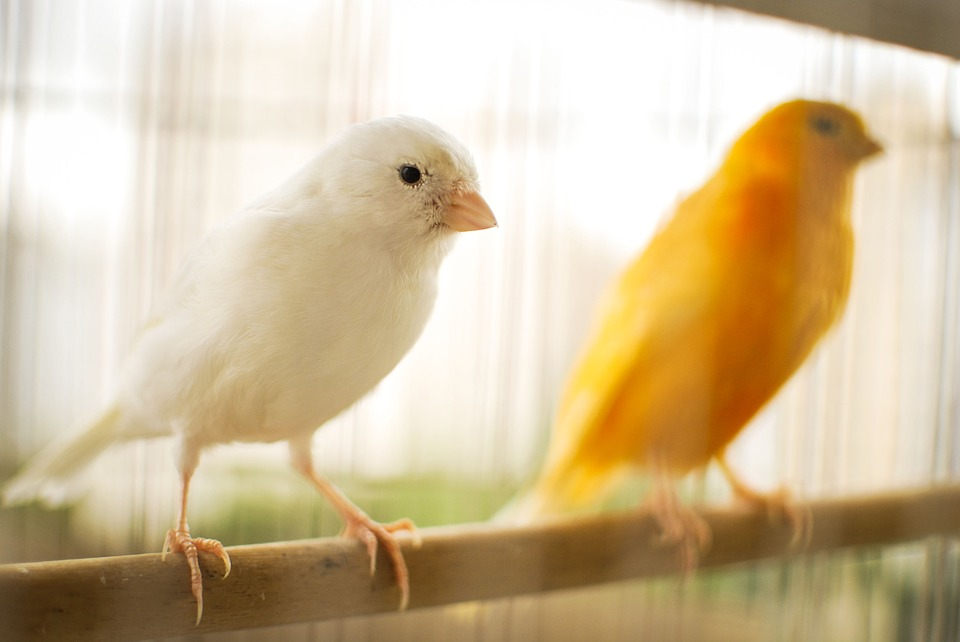 bird-2871833_960_720