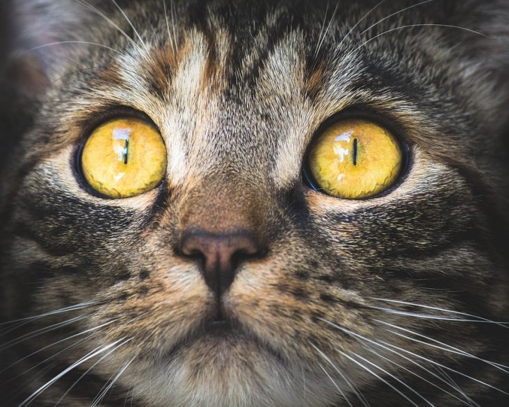 antiparasitaires pour chats