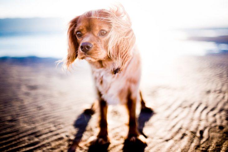 protéger votre animal de la chaleur