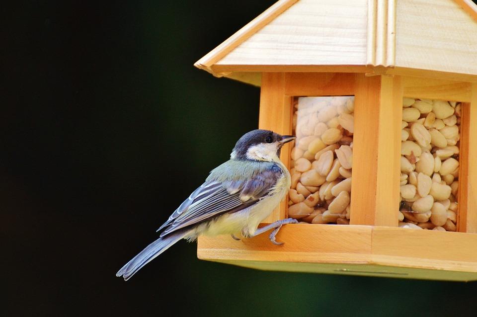 mejores semillas para pájaros silvestres