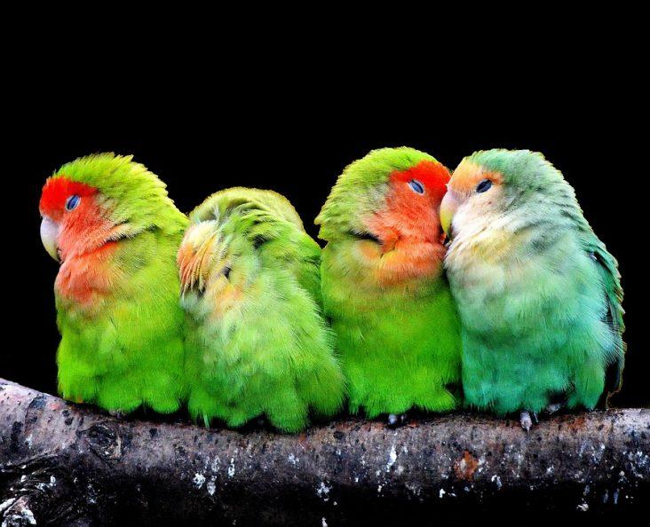 como curar la pata de un pájaro