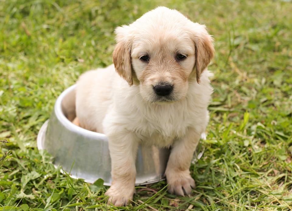 alimentos saludables para perros