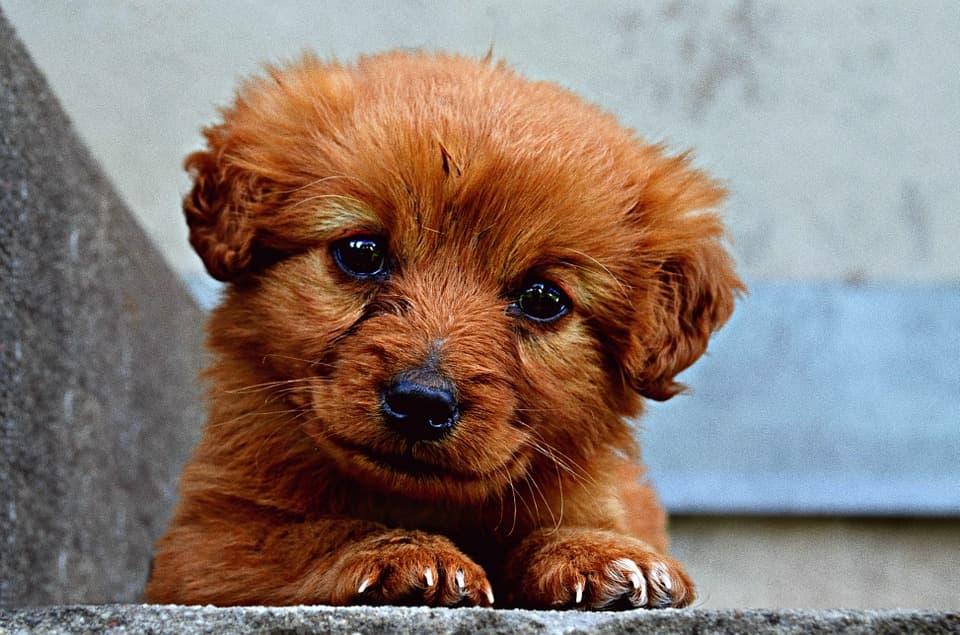 cómo tratar los parásitos en perros