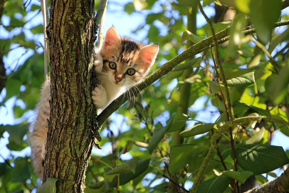 mejores antiparasitarios para gatos 2019
