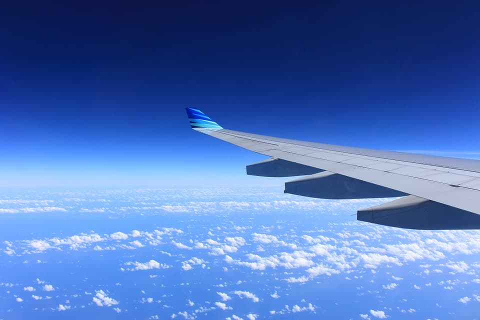 Cómo viajar con animales en avión