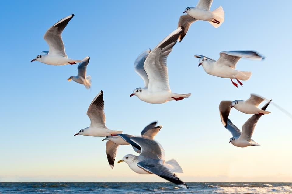 golpe de calor en aves