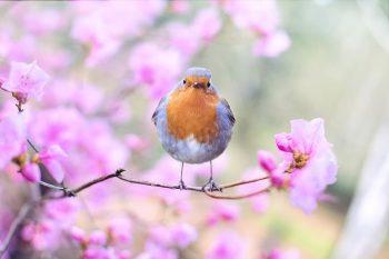 Pájaro en primavera