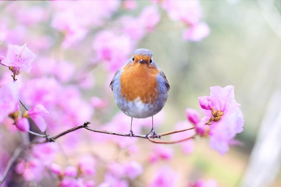 beneficios de los probióticos naturales para aves