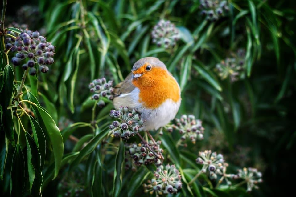 Piensos para pájaros insectívoros