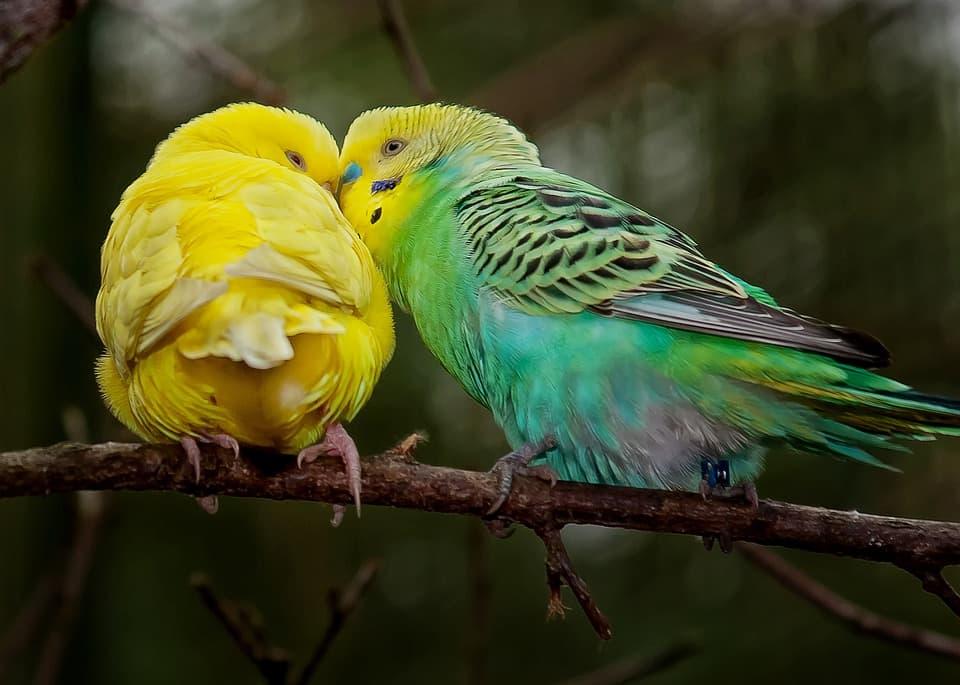 mejores productos naturales para pájaros