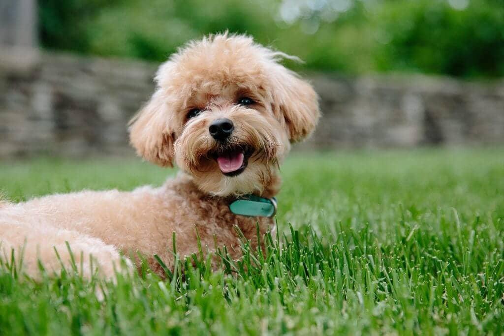 cómo diferenciar parásitos de perros