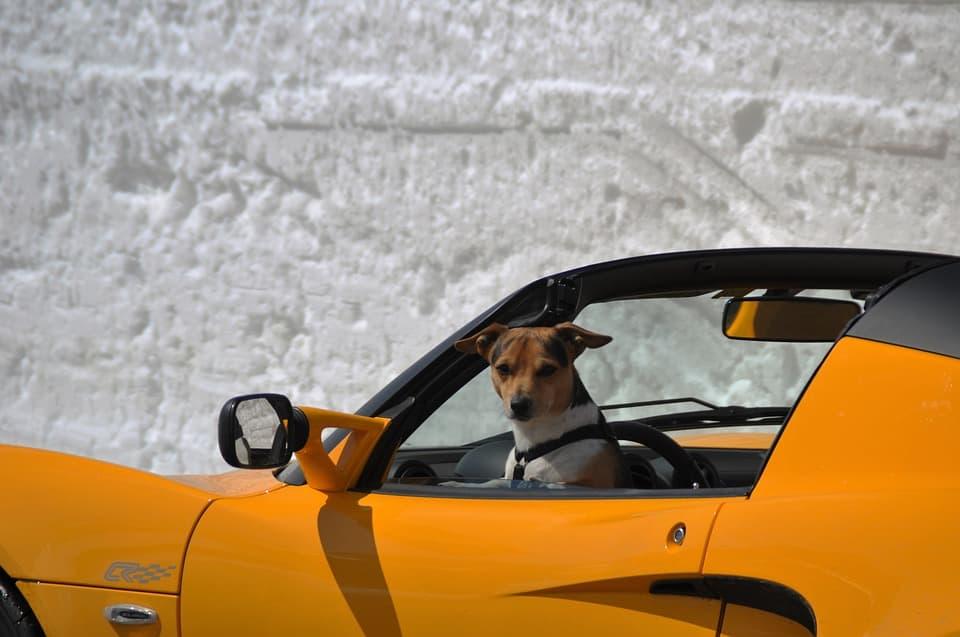 cómo viajar con tu mascota en coche