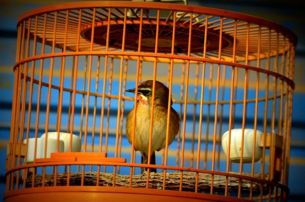 cómo proteger a los pájaros del frío