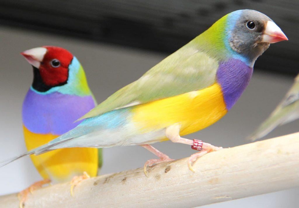 nidos de pájaros exóticos